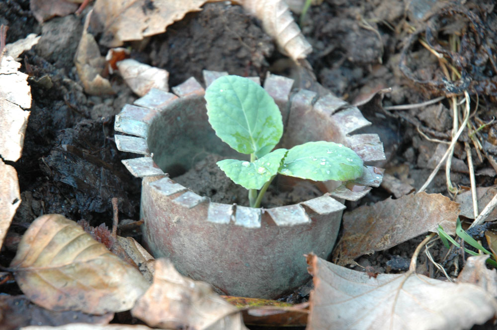 Anti-limaces bio pour un jardin au naturel