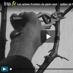 Taille de formation des arbres fruitiers
