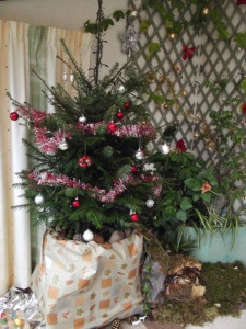 Louer un sapin de Noël