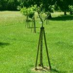 Tuteur arbre facile
