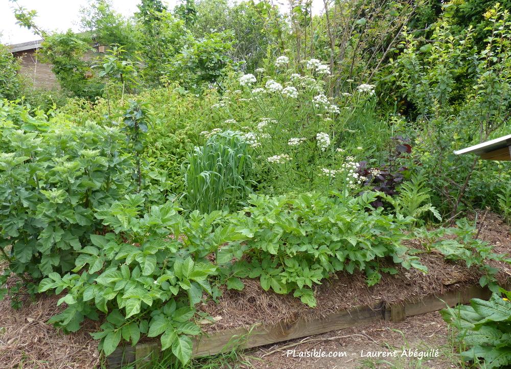 PLaisible jardin en permaculture